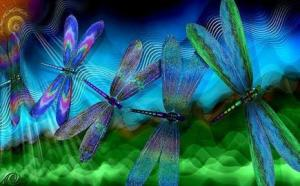 The dragonfly dance of transformation